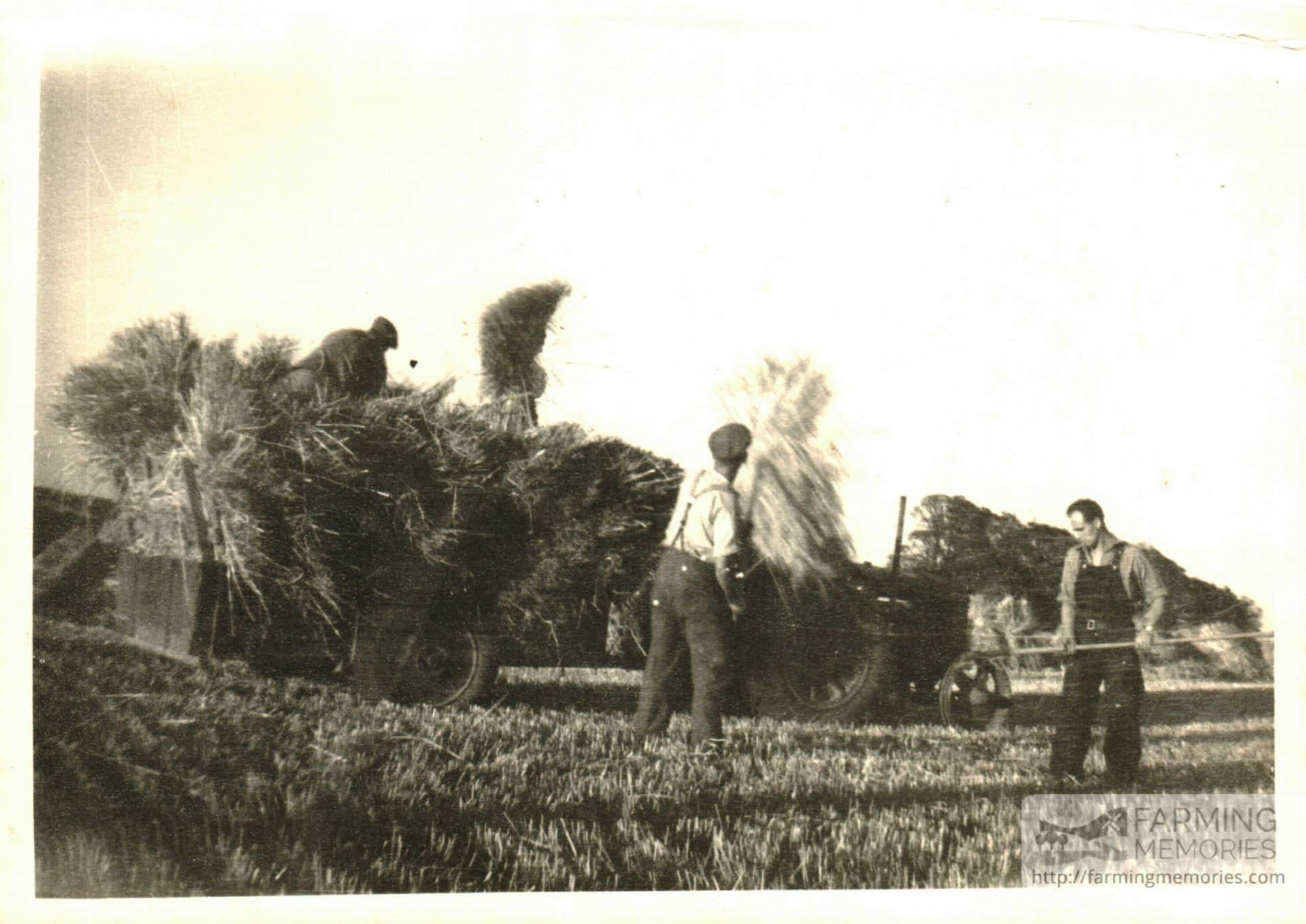 Andrew Groves on haymaking