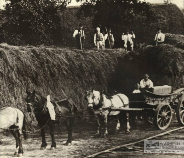 Haymaking at Apse Manor Farm 1920s