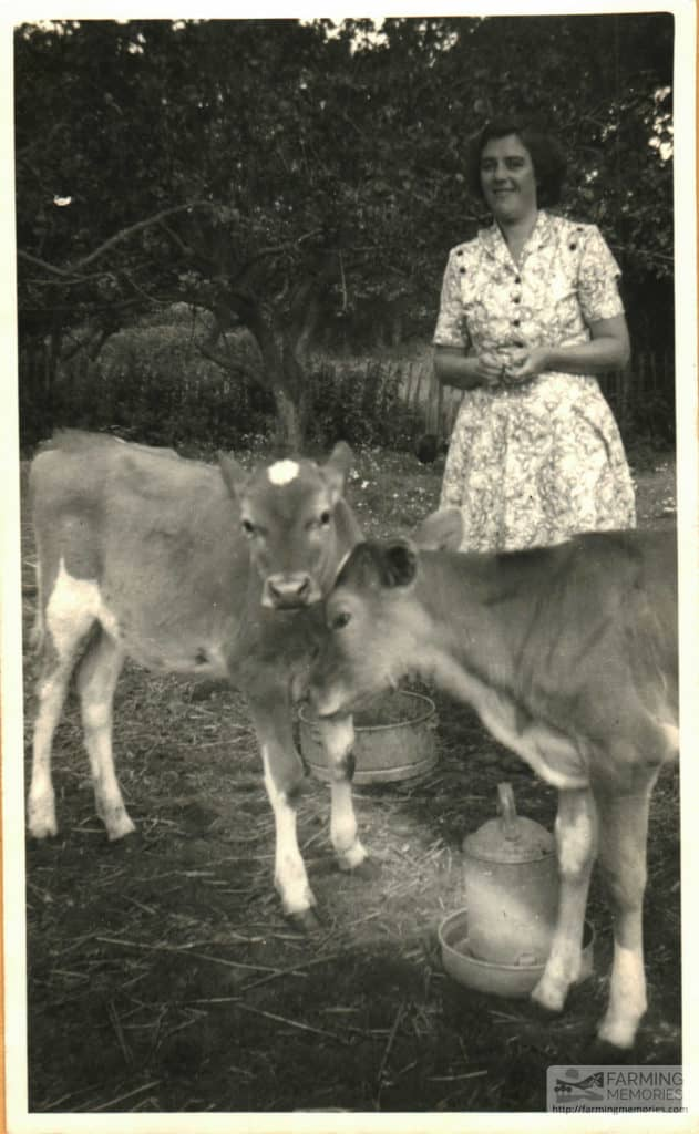 Beryl and cows on Chale Green