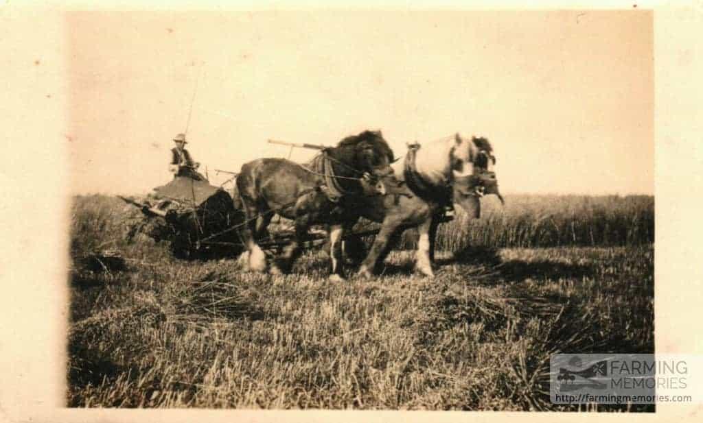 Three horses and binder
