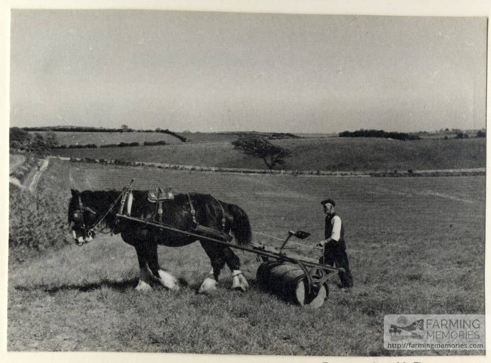 black and white photograph of a farmer rolling a field with a horse drawn roller. Photograph taken by Isle of Wight amateur photographer Fernao Pedro Mauricio Joao de Castel-Branco Manuel in 1946.
