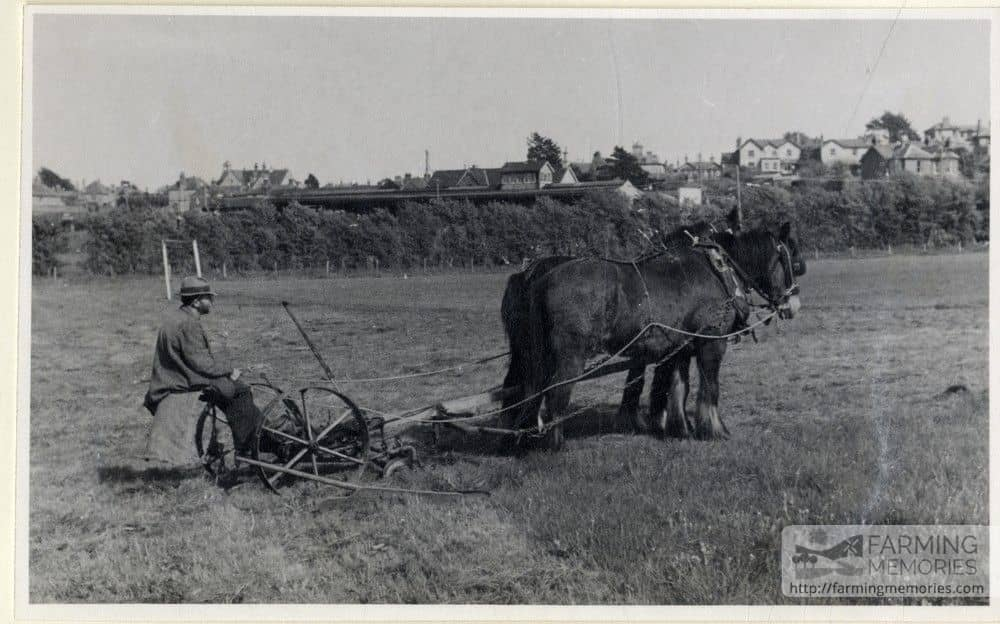 Black and white photograph of a horse-drawn grass cutter by Golf links Road, Sandown taken by Isle of Wight amateur photographer Fernao Pedro Mauricio Joao de Castel-Branco Manuel