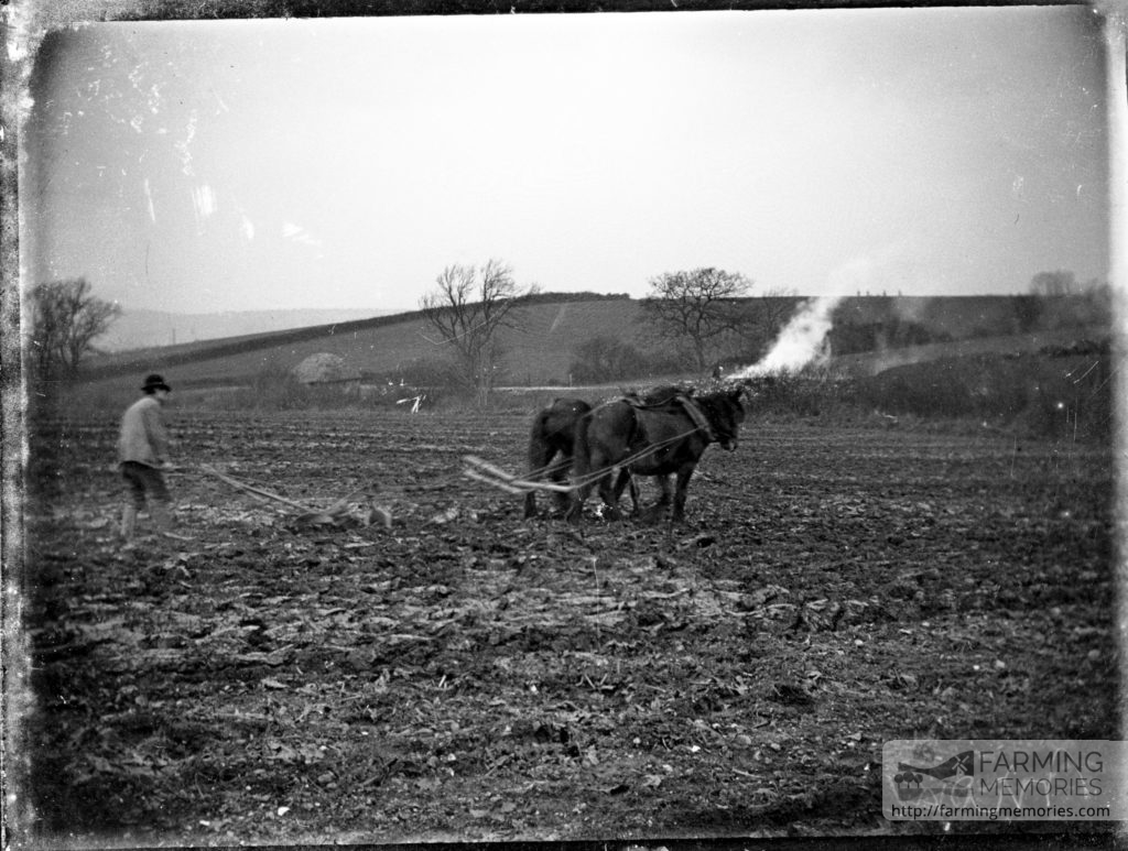 Glass negative of a pair of horses drawing a plough
