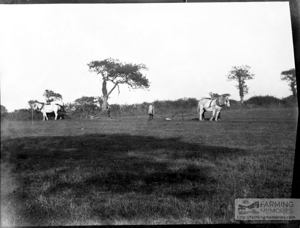 Glass negative of two horse drawn ploughs in a field