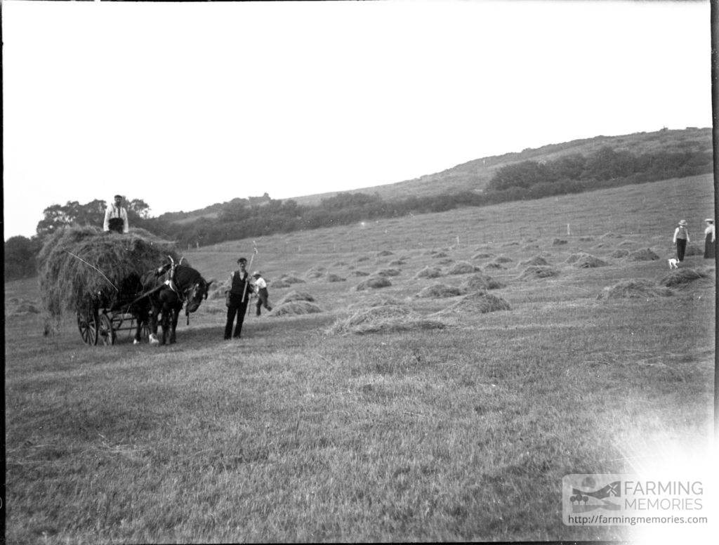 Glass negative of haymaking with horse and wagon