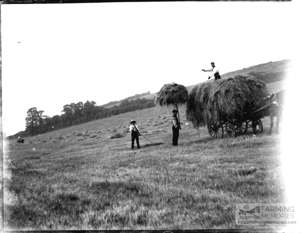 Glass negative of three men haymaking with horse and cart