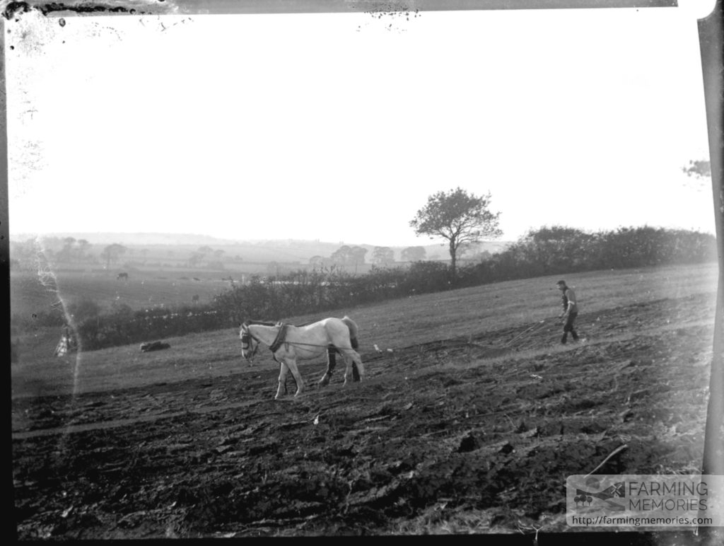 Glass negative of men using horse drawn plough