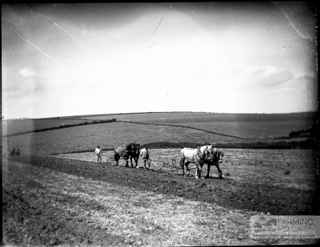Glass negative of two horse ploughs
