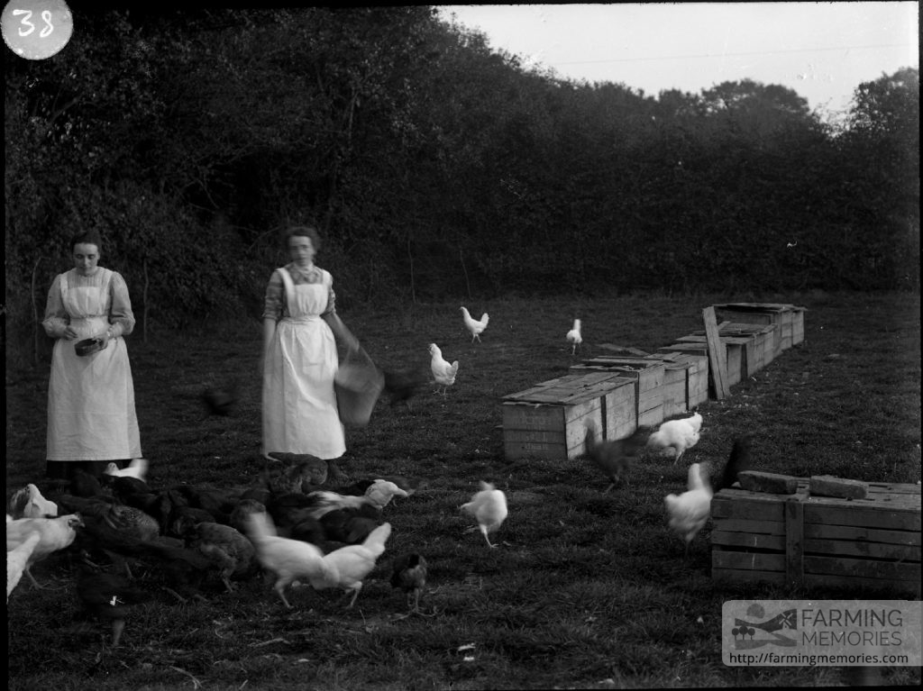 Glass negative of two women feeding free range hens