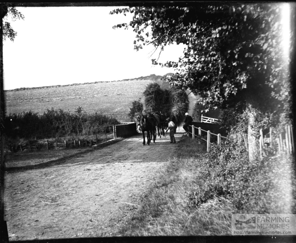 Glass negative of horses pulling wagons, loaded with willow