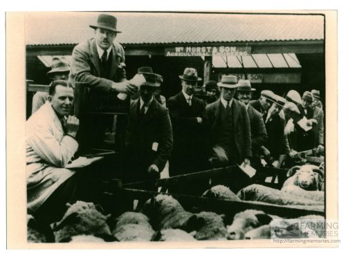 Black and white photograph of sheep being sold at Newport Cattle Market at the Spring Sale - Shows farmers and sellers, including David Dockrill