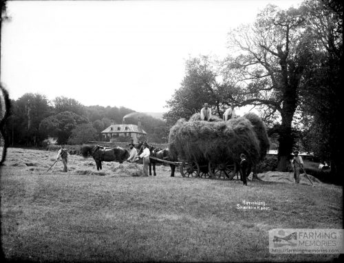 Glass negative of haymaking and a haywain at Shanklin Manor (before 1883 rebuild)