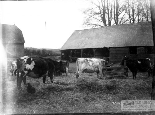 Glass negative of a farmyard scene
