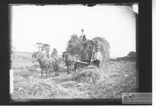 Photographic print taken from a glass plate negative in the collection of haymaking showing a pair of horses and tow farm workers loading a wagon