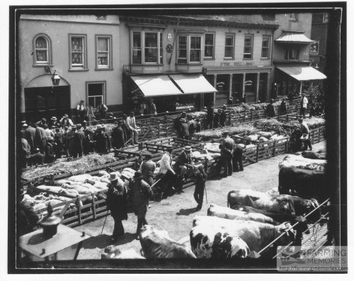 Black and white photograph of a market with livestock in progress in St James Square, Newport